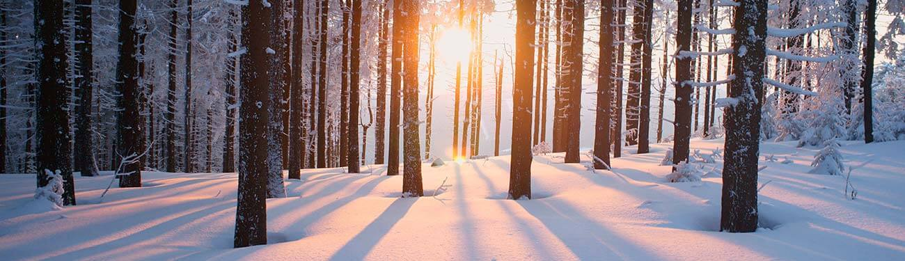Sunlight breaking through tree in the forest during winter